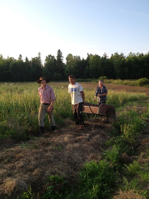 Garlic harvest crew: Dylan, Bruce, Christopher (and David)