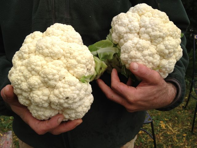 Finally!  Great cauliflower