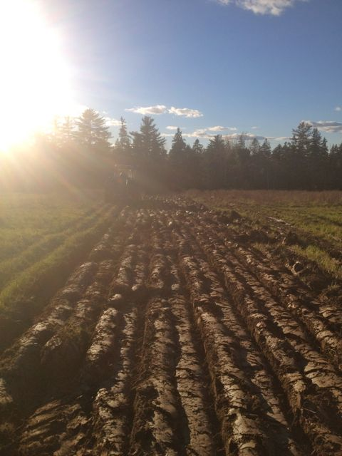 Getting land ready for next year's cover crops