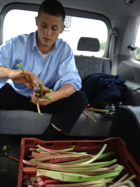 Bruce bunching rhubarb on the way to Victoria Park pick-up