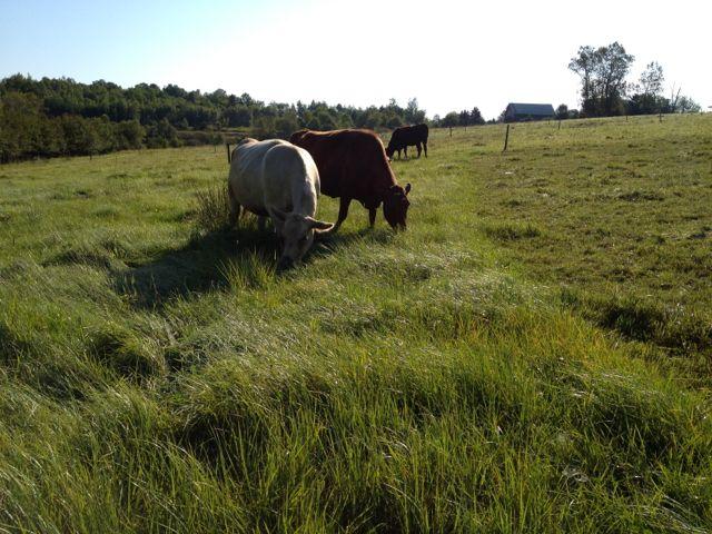 grazing14