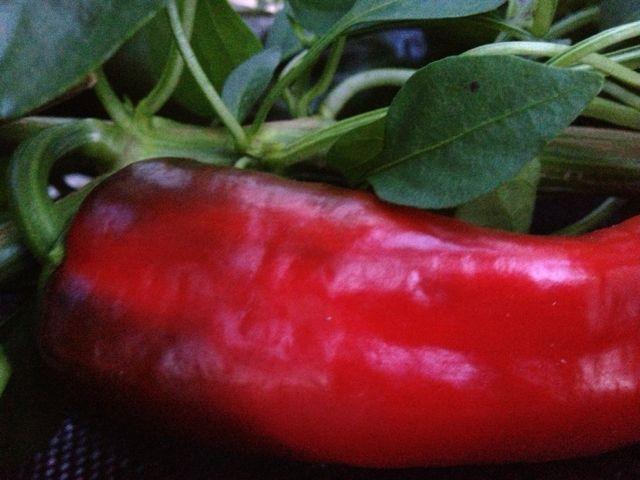 pepper12