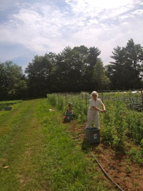 My mom, Wendy, helping me pick peas in July