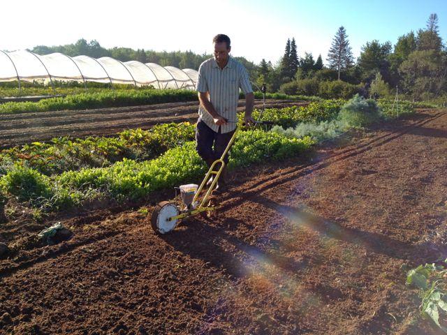 Seeding spinach