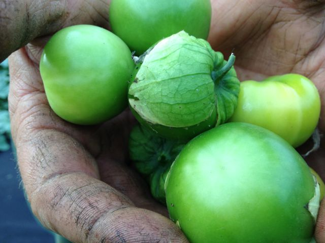 Tomatillos!  Bring on the salsa verde
