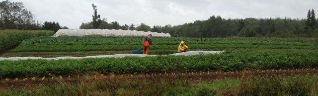 The crew did a lot of harvesting in the rain.  At least we've got some styling' rain gear!