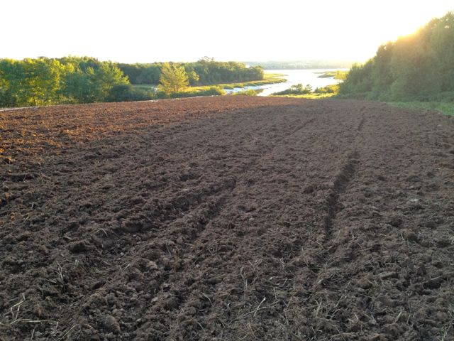 The fox field has been prepared and planted to the final winter cover crop.