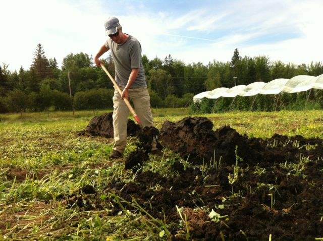 George came out for a day to help out.  He spread compost, made hay, and mowed a cover crop.  Thanks George!!