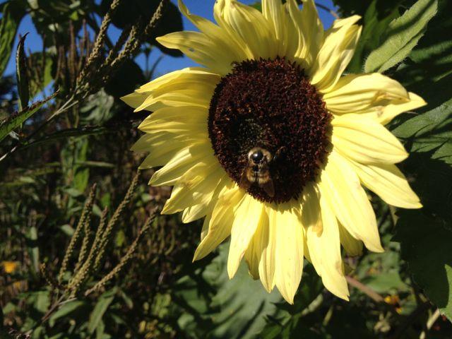 sunflowerbee19