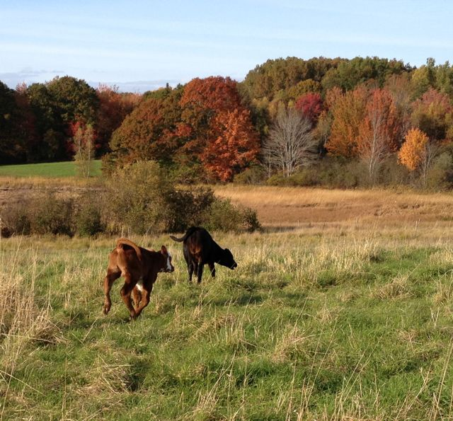 A joyful romp in the fall