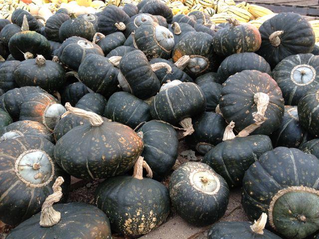 acornsquash21