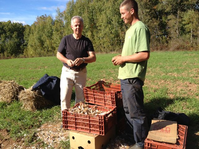 Bruce and his dad Hugh preparing garlic for planting