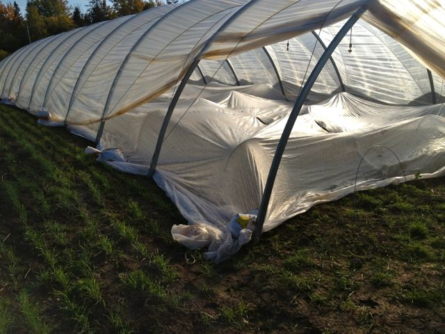 Here we are using a hoop house and row cover to keep crops cozy
