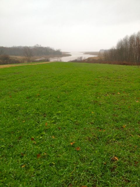Cover crop on back field by the Cogmagun river