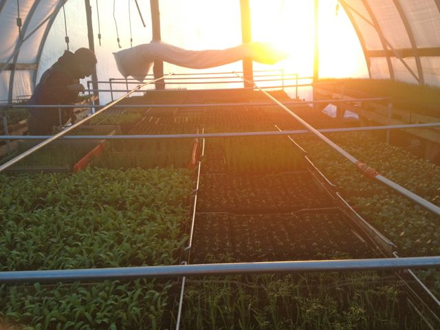 Seedling greenhouse at the end of the day