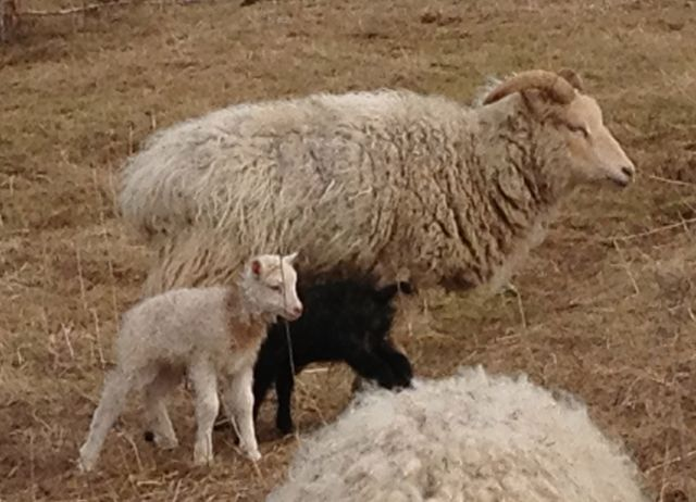 Loud Mouth is a great mom.  When she has little ones, she is very quiet.