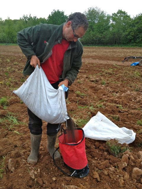 David seeding a cover crop of buckwheat.  It germinated very quickly!