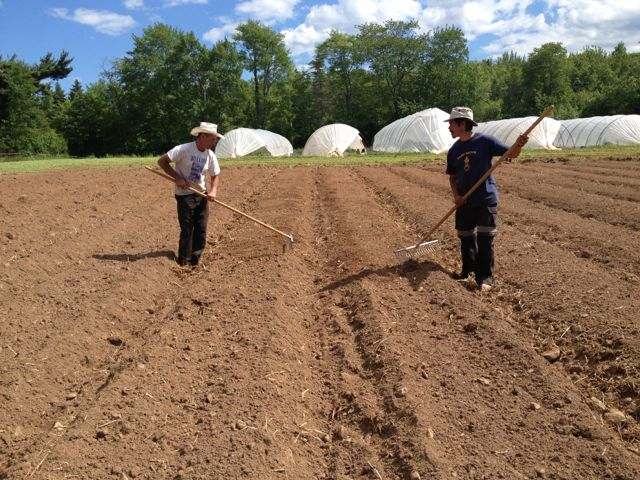 David and Benjamin raking beds in the front field