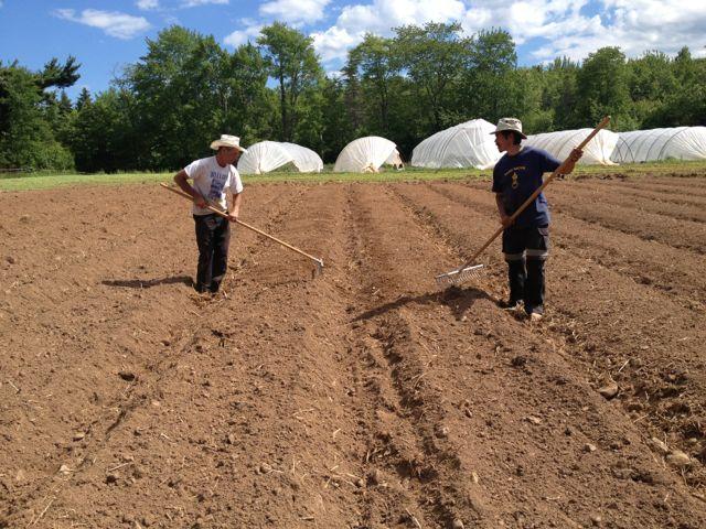 David and Benjamin raking beds in the front field