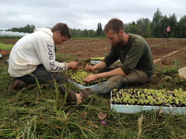 Bruce and Marshall preparing to plant out seedlings