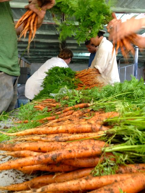 carrot7