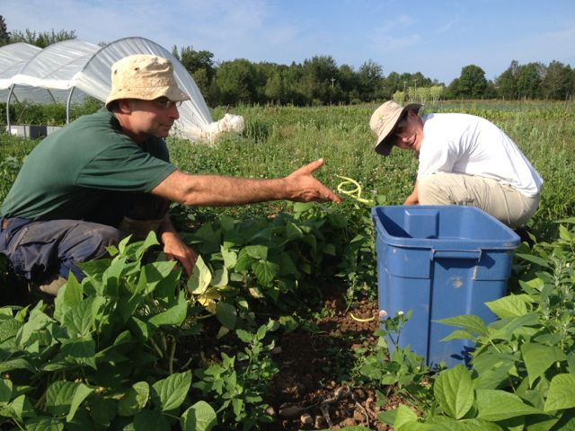 David and George picking beans