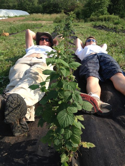George and Loïc resting after pinning down the landscape fabric around the raspberries