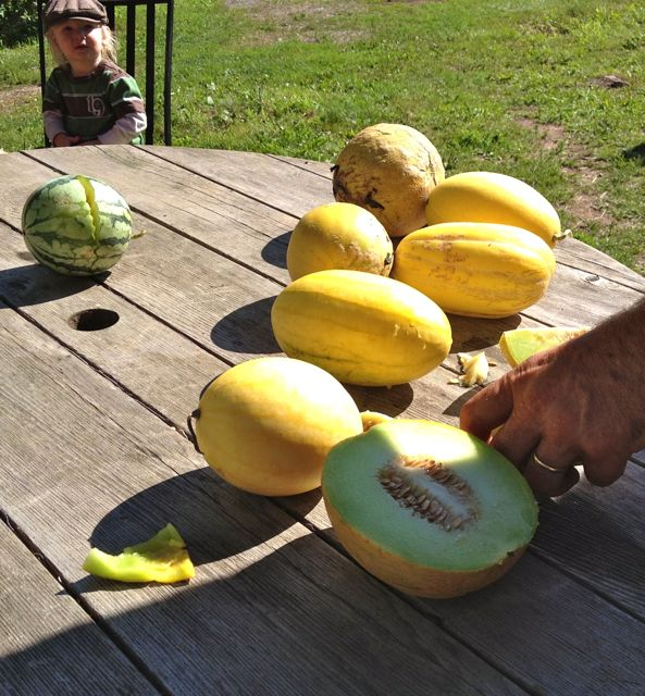 melon12