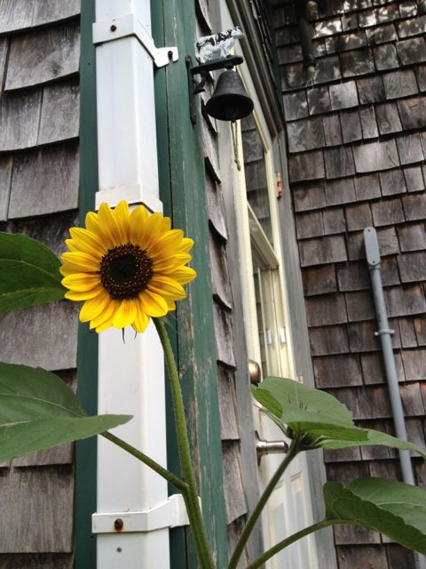 sunflowerss14
