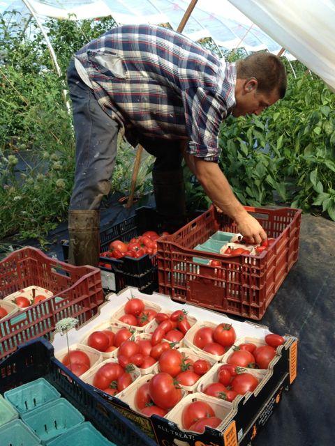 tomatobruce14