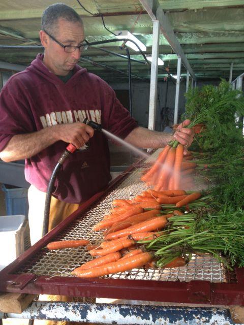 david carrots