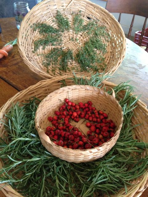Thyme, rosemary, and hawthorne berries