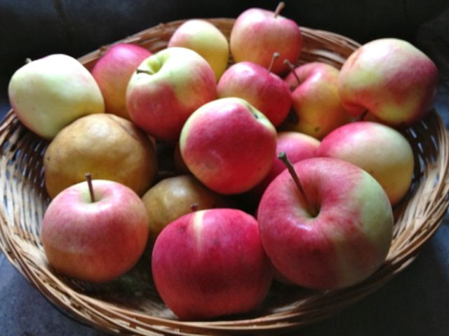 Ambrosia apples and Bosc pears