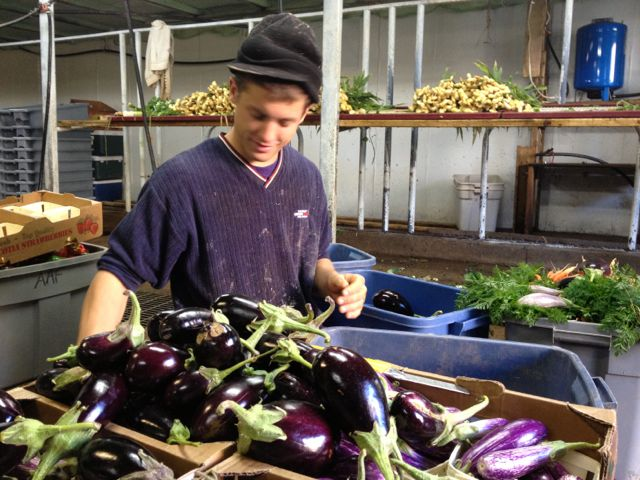 Bruce sorting vegetables