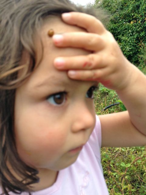 Benjamin and Andrea's daughter Elianna discovered a Ladybug on her forehead.  She was pretty cool about it.