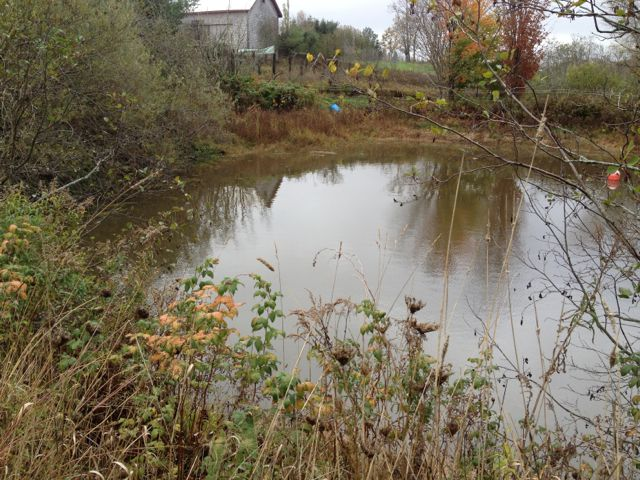 All this rain has made the farm roads a mess, but the irrigation pond is full again.  Phew!