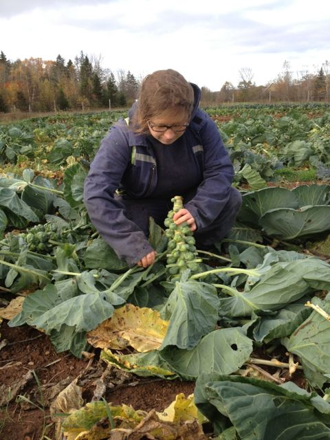 Lori picking brussels sprouts