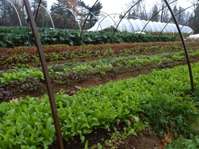Moving hoop houses to winter crops
