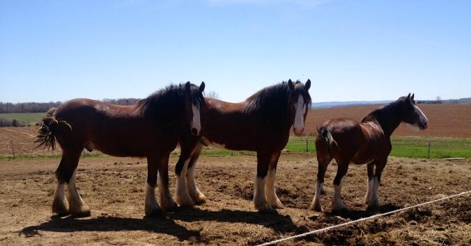 Horses at Caseydale Farm
