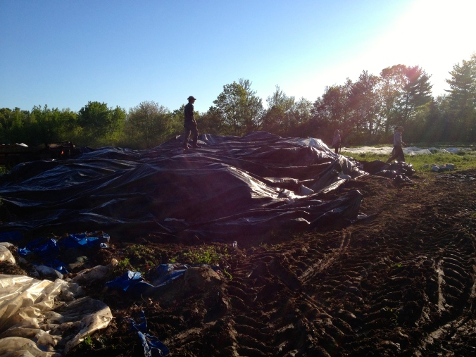 Horse manure is covered -- yay!