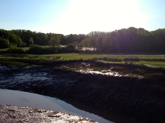 Fox field, view from the river