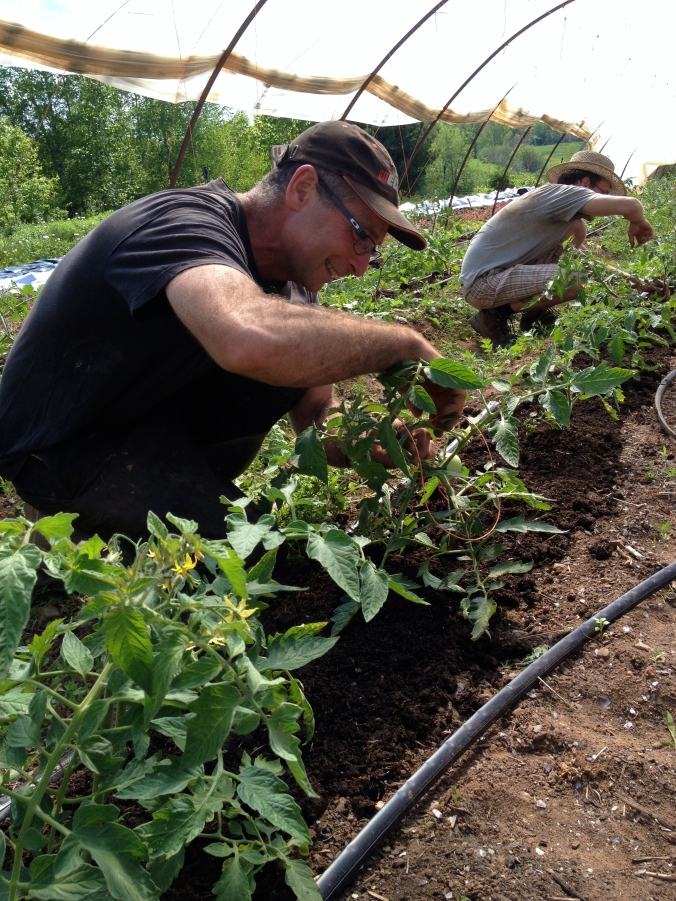 David and Kevin trellising tomatoes