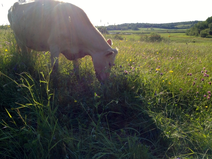 Pasture happiness!