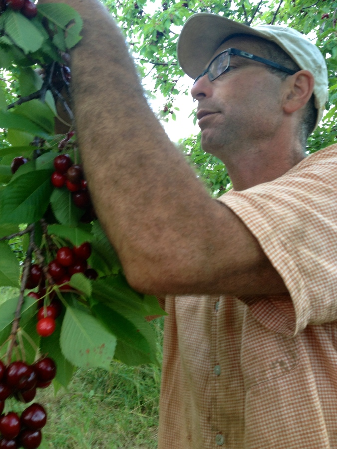 David picking cherries