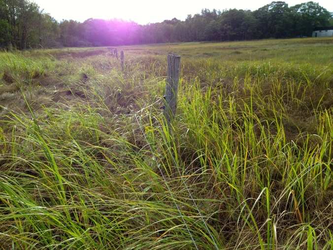 Fencing down on the marsh