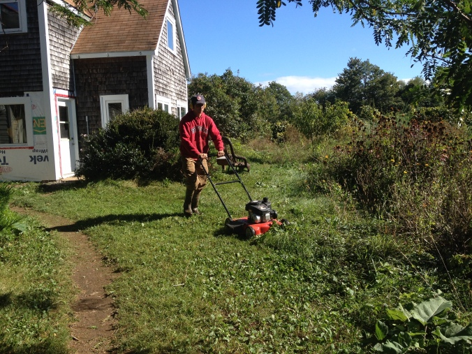 Must be Open Farm Day again... David's mowing the lawn