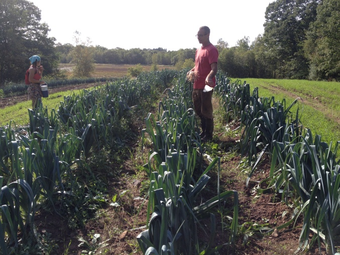 Leeks, with cover crops on both sides