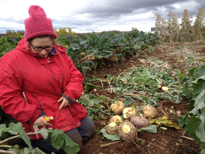 Lori, harvesting turnip under a dramatic sky