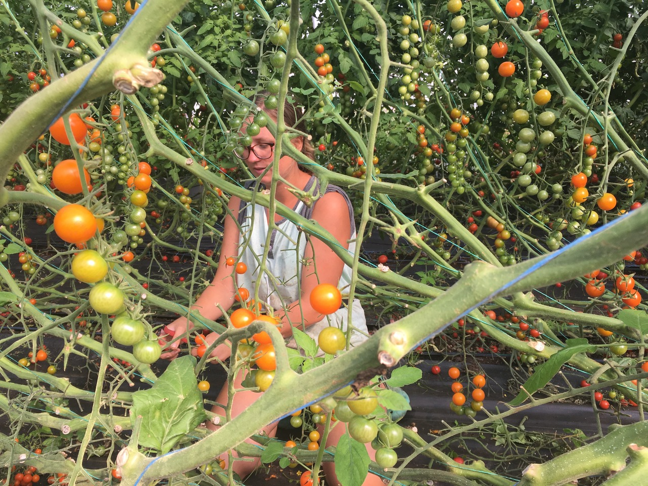 rhitomatoes